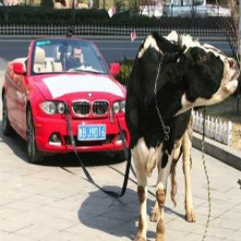 АвтоПрокат (Аренда Авто)