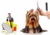 Dog-Grooming-Methods